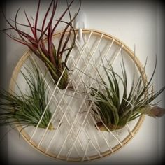 DIY Air Plant Hanger Collection from Nine Red (ww: that's pretty clever. easy to take plants out to wet down.)