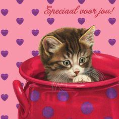 Schattige kaart met klein katje in rode vaas- Greetz