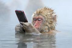 Ничто человеческое не чуждо: японские макаки, сидя в ...