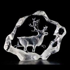 Wildlife Reindeer / Ren - Mats Jonasson Målerås Sweden
