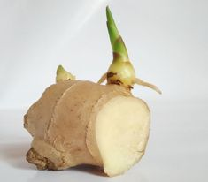 Statt kaufen: Ingwer einfach nachwachsen lassen – so geht's Plant ginger: You have to pay attention to this when growing – Utopia. Potted Plants Patio, House Plants Decor, Diy Planters, Plant Decor, Growing Ginger, Growing Herbs, Growing Vegetables, Natural Farming, Plantar