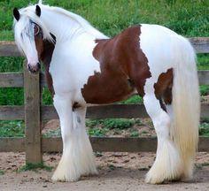 """scarlettjane22: """"  Horse Lovers """" Beautiful….❤"""