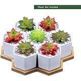 Amazon.com : Mini Rustic Planter Boxes w/ 8 Ceramic Succulent Plant Pots, Set of 2 - MyGift : Patio, Lawn & Garden