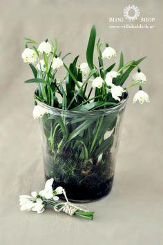 #spring #frühling