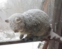 Cold snow covered Kitty- :( I can only hope that whoever took this pic, brought the kitty inside