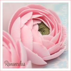 Gumpaste Ranunculus and other sugar flowers, source for purchasing cakes, but great examples of flowers