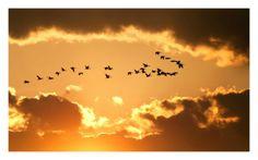 Ptica, ki hoče poleteti nad ustaljeno tradicijo in predsodke, mora imeti močna krila. Žalostno je videti neubogljence, kako izčrpano omahnejo nazaj na tla. By: #KateChopin