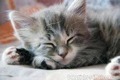 kitten - Cerca con Google