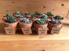 Succulents in terra cotta pots. Perfect Thank You gift!