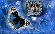 gifs de lobos reales - Buscar con Google