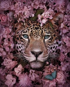 16 Stunning Animal Portraits By Andreas Häggkvist To Raise Awareness For Endangered Species This Visual Artist Uses His Magical Skills To Raise Awareness For Engangered Species Tier Wallpaper, Animal Wallpaper, Wallpaper Maker, Animal Species, Endangered Species, Animals Images, Animal Pictures, Beautiful Creatures, Animals Beautiful
