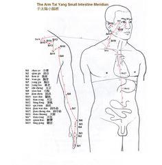 Arm Tai Yang Small Intestine Meridian