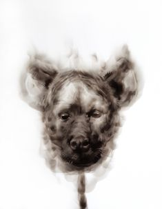 Available for sale from David Krut Projects, Diane Victor, Hyena Dog Smoke on paper, 24 × 19 in Contemporary African Art, Hyena, Elements Of Art, Art Fair, Photo Galleries, Artsy, David, Drawings, Dogs