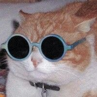"spiirt: ""Some cats in some funky sunglasses "" Funny Cats, Funny Animals, Cute Animals, I Love Cats, Cool Cats, Friends Theme Song, Cat Icon, Cat Sunglasses, Cat Aesthetic"