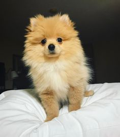This is the Why don't we boys dog: Kong dasavage. He is not to be mistaken for Logans dog: Kong da savage Animals And Pets, Baby Animals, Funny Animals, Cute Animals, Cute Puppies, Cute Dogs, Dogs And Puppies, Doggies, Sweet Dogs