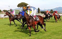 Should You Trust Free Horse Racing Tips?