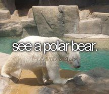 Inspiring picture before i die, bucket list, perfectbucketlist, polar bear, upclose Resolution: 500x320 px. Find the picture to your taste!