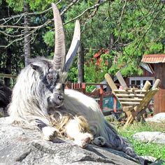 Kristiansand Zoo