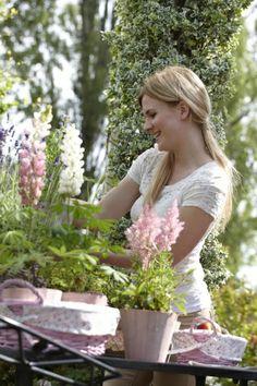 Astilbe, spirea. #planten #tuinplant #zomerbloeiers