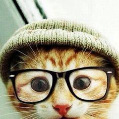 Gatto hipster