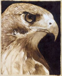 hawk pyrography drawing by jim h on ARTwanted