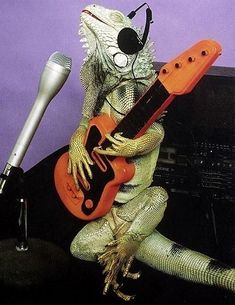 Community Post: 15 Animals That Have Started Their Own Band