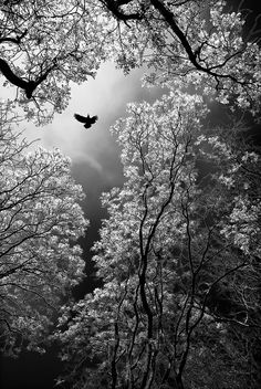 ♡ ♡ ♡ ansel adams, nature photography, amazing photography, black n white, black Amazing Photography, Nature Photography, Digital Photography, Photography Tips, Cool Photos, Beautiful Pictures, Trees Beautiful, Ansel Adams, Black And White Pictures