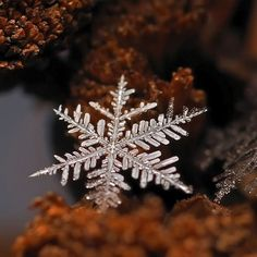 Ethereal Macro Photos of Snowflakes in the Moments Before They Disappear. Russian photographer Andrew Osokin is a master of winter macro photography. Fotografia Macro, Snowflake Photography, Nature Photography, Micro Photography, Photography Series, Close Up Photos, Cool Photos, Amazing Photos, Beautiful Pictures