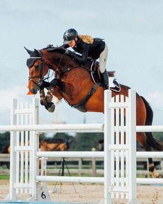 Vedette Baloubet - Venice - - Gelding - Baloubet du Rouet boi - my Gucci flips flops horse 😂 Cute Horses, Pretty Horses, Horse Love, Beautiful Horses, Equestrian Outfits, Equestrian Style, Show Jumping Horses, English Riding, Weimaraner