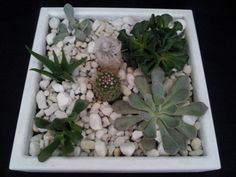 Living succulents and cacti garden in a large by UrbanSucculent, $98.00
