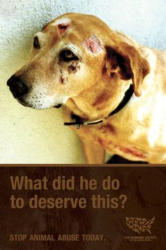 NO animal deserves cruelty. Stop animal abuse!!