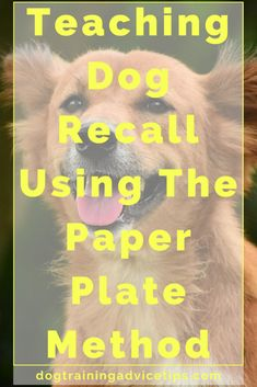 Teaching Dog Recall Using The Paper Plate Method - Dog Obedience Training Tips - Dogs Dog Training Come, Training Your Puppy, Dog Training Tips, Potty Training, Training Schedule, Training Equipment, Agility Training, Dog Agility, Obedience Training For Dogs