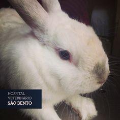 Hoje o Kiko veio realizar o habitual corte de dentes. #coelho #exótico #veterinario #lisboa #odontologia #cortededentes #incisivos