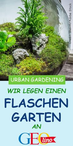 DIY: The bottle garden-DIY: Der Flaschengarten We show you how to build a bottle garden and reveal what you should pay attention to. Garden Types, Diy Herb Garden, Diy Garden Decor, Gnome Garden, Amazing Gardens, Beautiful Gardens, Bottle Garden, Diy Bottle, Hydroponic Gardening