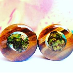 """New to the shop!  Tigers Eye Cannabis filled plugs  🐯💚 Shown in 1"""""""