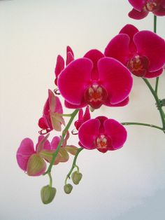 most beautiful orchids | Recent Photos The Commons Getty Collection Galleries World Map App ...