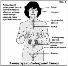 Упражнение для гормональной системы