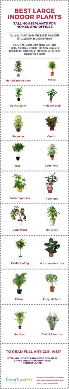 Find out best large indoor plants for your home or office. Tall houseplants look fascinating and create the illusion of enlarged interior.
