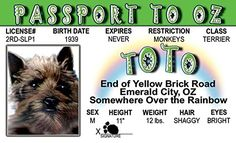 Toto Wizard of Oz Fun Fake ID License Signs 4 Fun http://www.amazon.com/dp/B00QB5M0YC/ref=cm_sw_r_pi_dp_f5JSvb1G7Y2X9