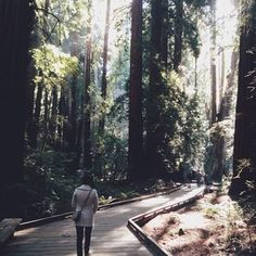 Travel Snap Shot of The Muir Woods National Monument in California, a Tree Hugger's Paradise. While wandering the woods I felt a sense of stillness settle inside me. These woods were a sanctuary where I left my fear and anxiety. I took a deep inhalation of the salty-woodsy goodness, and surrendered to open my heart to new possibilities. Believe in yourself, and walk the path to your happiness.