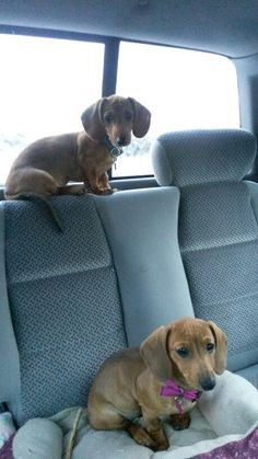 Taking over the back seat