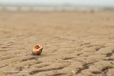 It was low tide along the entrance to the Houston Ship Channel and this shell stood out on the exposed sand.