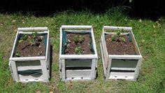 Cómo crear un huerto casero con una caja de fruta
