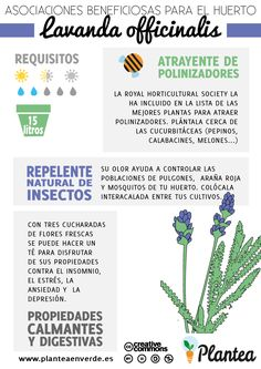 Pinterest the world s catalog of ideas for Asociacion de plantas en el huerto