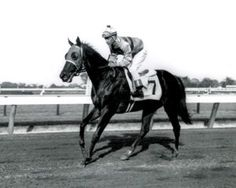 Affectionately: The Queen Of Racing, by Amy Nesse