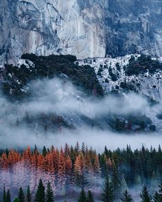 The textures of Yosemite. Each piece a thread that woven together blanket this place with extreme beauty. by andy_best