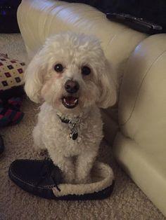 I like my daddy's slipper!