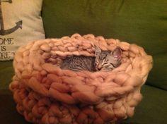 Merino Wool Blanket, Baby Kitty, Random Stuff, Wool, Metal