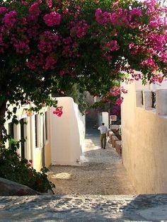 Greece Bougainvillea