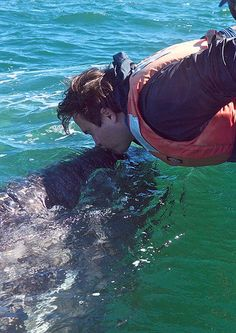 The friendly whales of Laguna San Ignacio come to the boats, get kisses and pats, leave when they want to. The whales come to the boats -- they're never followed. Photo by Gib Myers.    To help save these whales and their habitat, visit: SaveBioGems.org